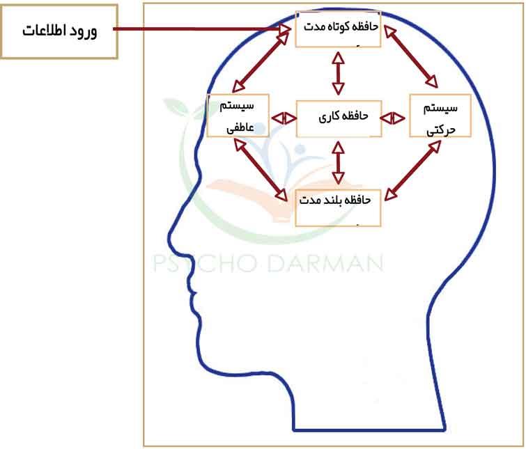 انواع حافظه انسان را بشناسید